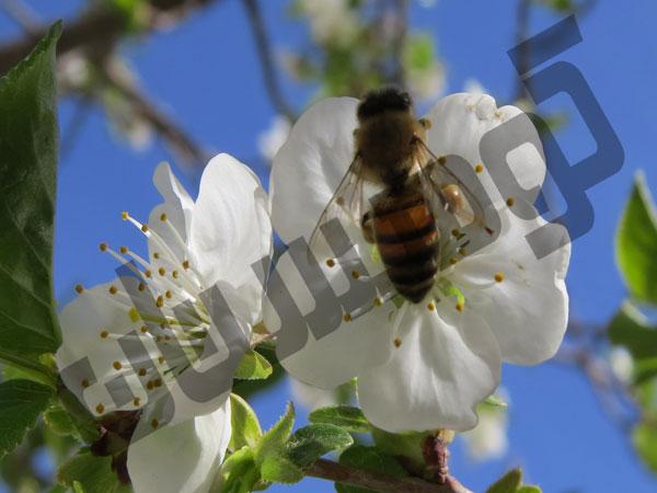 عسل طبیعی کوهستان