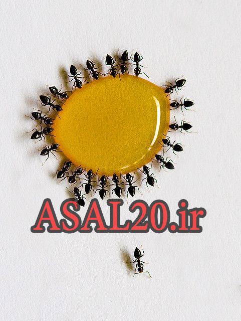 روش تشخیص عسل طبیعی و تقلبی با کمک مورچه