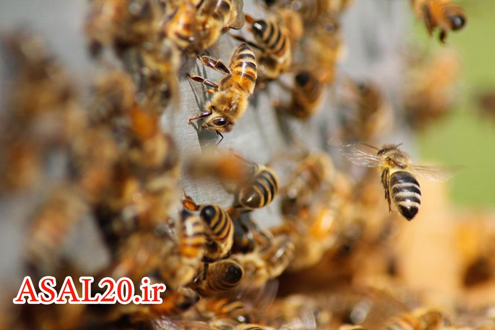عسل طبیعی کوهستان کندو